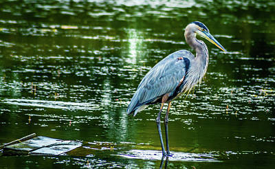Wet Fly Digital Art - Blue Heron by Optical Playground By MP Ray