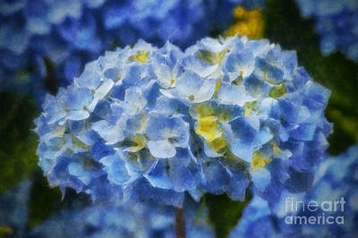 Blooming Digital Art - Blue Hydrangea Art by Ian Mitchell