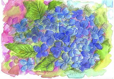 Denim Drawing - Blue Hydrangea by Cathie Richardson