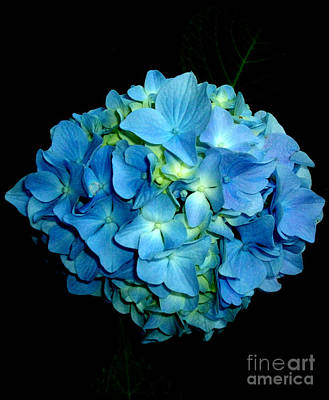 Shaby Chic Photograph - Blue Hydrangea by H Cooper