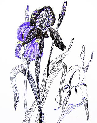 Simplicity Drawing - Blue Iris by Marilyn Smith