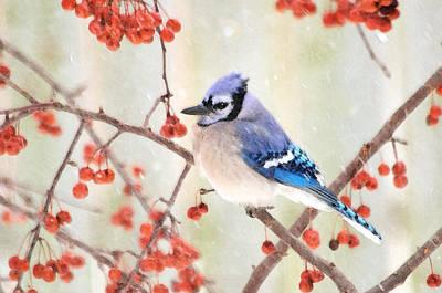 Bluejay Digital Art - Blue Jay In Snowfall by Betty LaRue