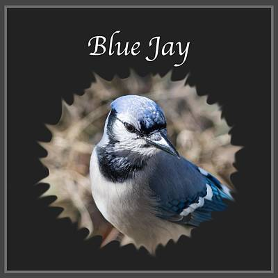Blue Jay Photograph - Blue Jay    by Jan M Holden