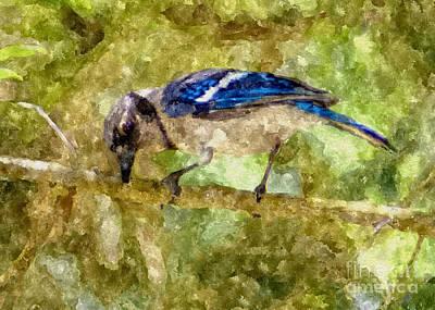Blue Jay Print by Olga Hamilton