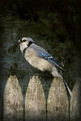 Blue Jay On The Fence Print by Angie Tirado