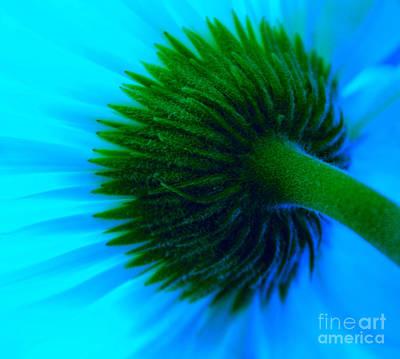 Nature Abstracts Photograph - Blue Joy by Krissy Katsimbras