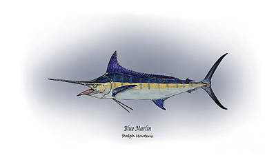 Angling Drawing - Blue Marlin by Ralph Martens
