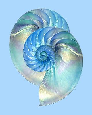 Blue Nautilus Pair Print by Gill Billington