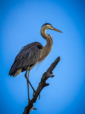 Heron Photograph - Blue On Blue by Marvin Spates