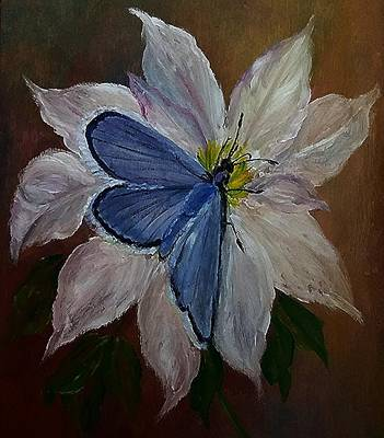 Clematis Painting - Blue On White by Sandra Maddox