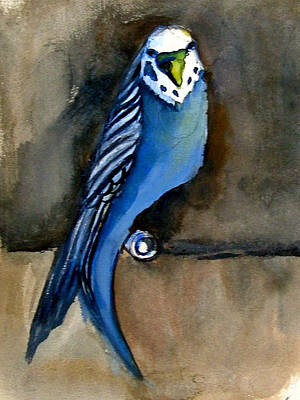 Parakeet Drawing - Blue Paraket by Mindy Newman