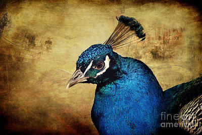 Birds Mixed Media - Blue Peacock by Angela Doelling AD DESIGN Photo and PhotoArt