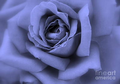 Floral Digital Art Digital Art Digital Art - Blue Rose Abstract by Carol Groenen