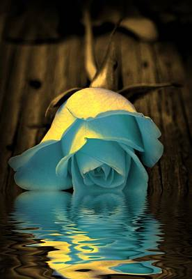Roses Digital Art - Blue Rose Reflection by Lilia D