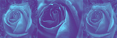 Tryptych Photograph - Blue Rose Tryptych by Nareeta Martin