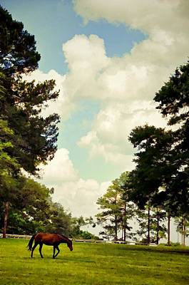 Blue Skies And Pines Print by Jan Amiss Photography