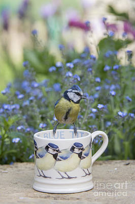 Blue Tit Mug Print by Tim Gainey