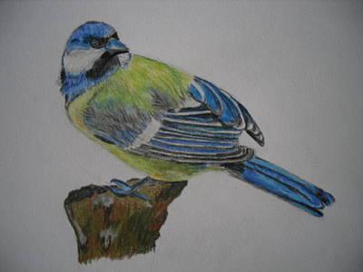 Blue Tit Print by Tanya Patey