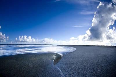 Small Turtle Photograph - Blue Velvet by Sean Davey