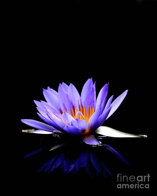 Blue Water Lily . 7d5714 Print by Wingsdomain Art and Photography