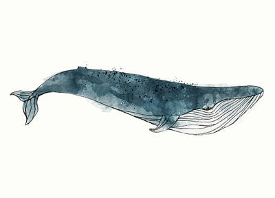 Whale Mixed Media - Blue Whale From Whales Chart by Amy Hamilton