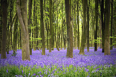 Bluebell Carpet Print by Jane Rix