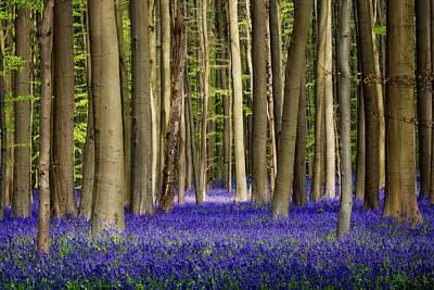 Forest Floor Photograph - Bluebell Forest by Studio Yuki