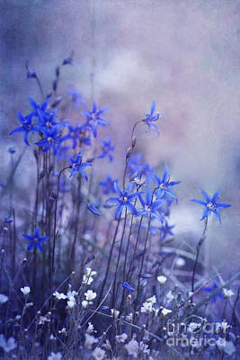 Blueish Photograph - Bluebell Heaven by Priska Wettstein