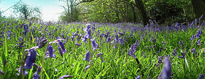 Bluebell Meadow Print by The Rambler