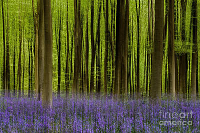 Icm Photograph - Bluebell Woodland Me by Richard Thomas
