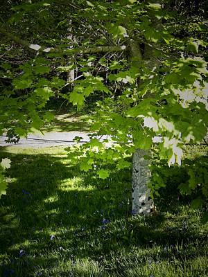 Flower Photograph - Bluebells In Killarney National Park Ireland by Teresa Mucha