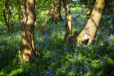 New Forest Photograph - Bluebells In The New Forest by Joana Kruse