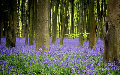 Peaceful Photograph - Bluebells by Jane Rix