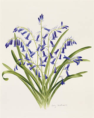 Bell Drawing - Bluebells by Sally Crosthwaite