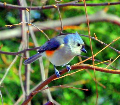 Bluebird Original by Aron Chervin
