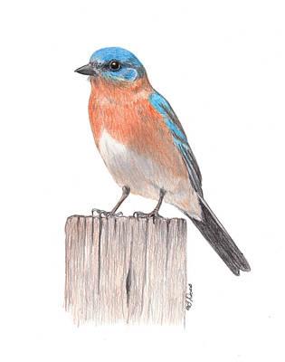 Bluebird Drawing - Bluebird On Post by Betsy Davis