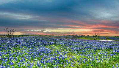Sunset Photograph - Bluebonnets At Ranch  by Tod and Cynthia Grubbs