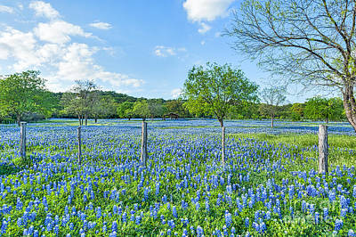 Tree Photograph - Bluebonnets Fields by Tod and Cynthia Grubbs