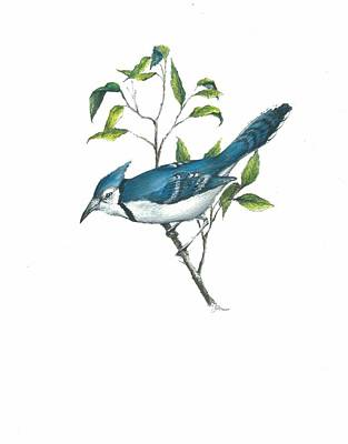 Bluejay Mixed Media - Bluejay by Jim  Romeo
