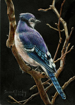 Bluejay Drawing - Bluejay On Sycamore by Susan Donley