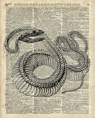 Boa Snake Skielet An Dictionary Page Print by Jacob Kuch