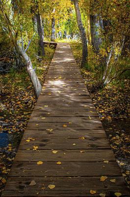 Aspen Tree Fall Colors Photograph - Boardwalk Over Convict Creek by Ralph Vazquez
