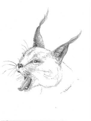 Bobcat Print by Crazy Cat Lady