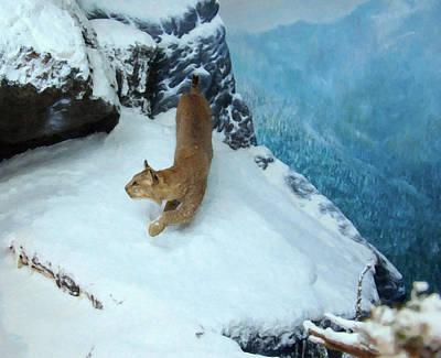 Bobcat On A Mountain Ledge Print by Chris Flees