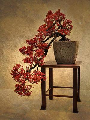 Bonsai Photograph - Bonsai Beauty by Jessica Jenney