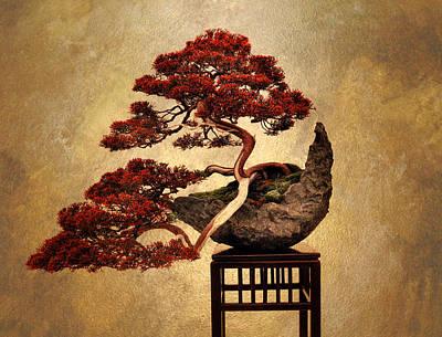 Bonsai Photograph - Bonsai  by Jessica Jenney