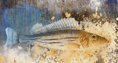 Book Of Fish Collage Print by Carol Leigh