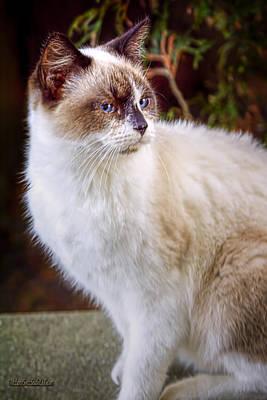Cat Photograph - Bookend Kitty by LeeAnn McLaneGoetz McLaneGoetzStudioLLCcom