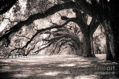 Tree Photograph - Boone Hall Plantation Live Oaks by Dustin K Ryan