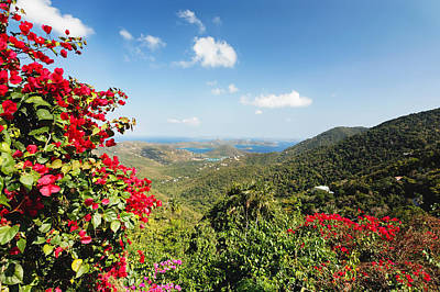 Caribbean Flowers Print featuring the photograph Bordeaux Point View St John Usvi by George Oze